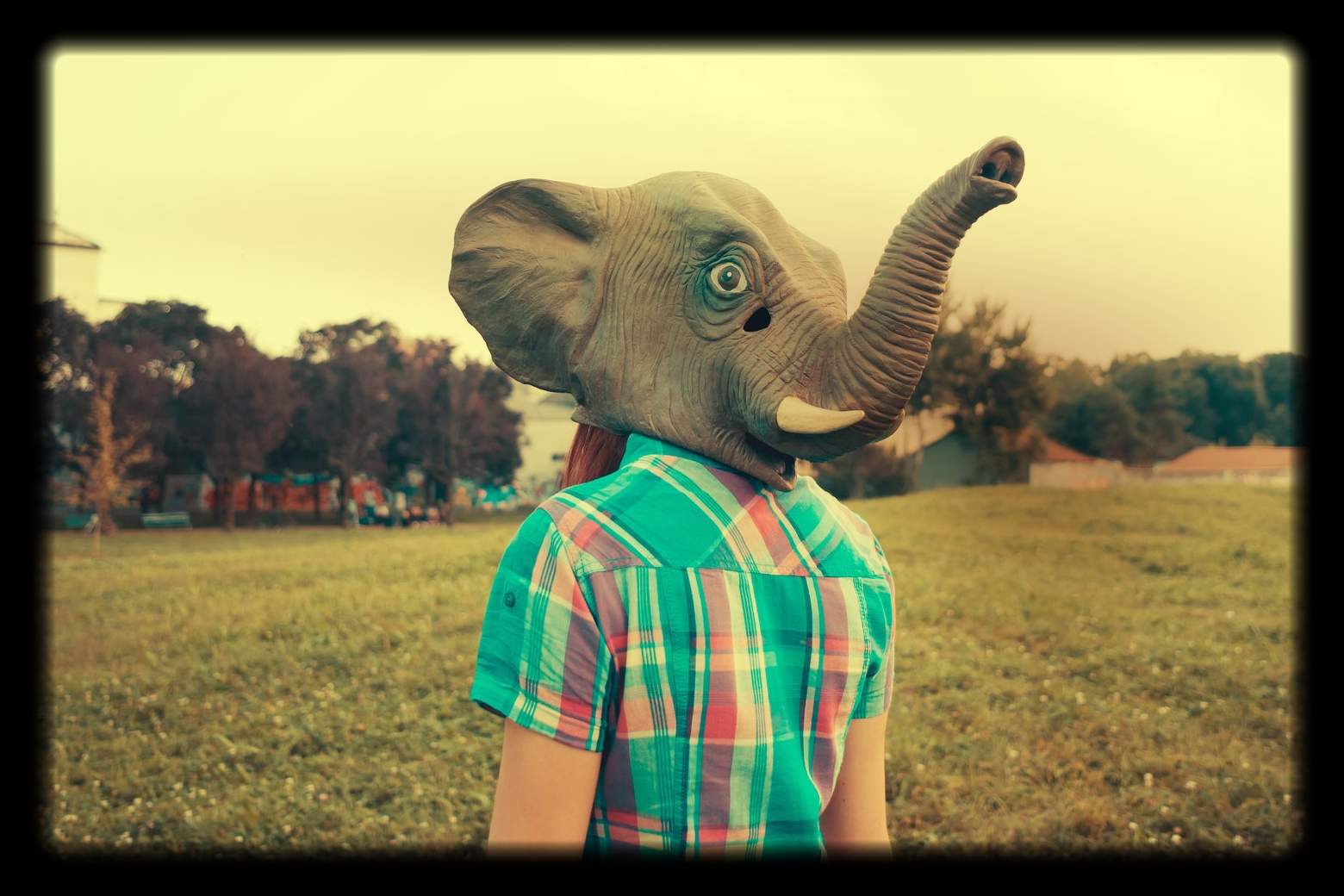 proverbial elephant
