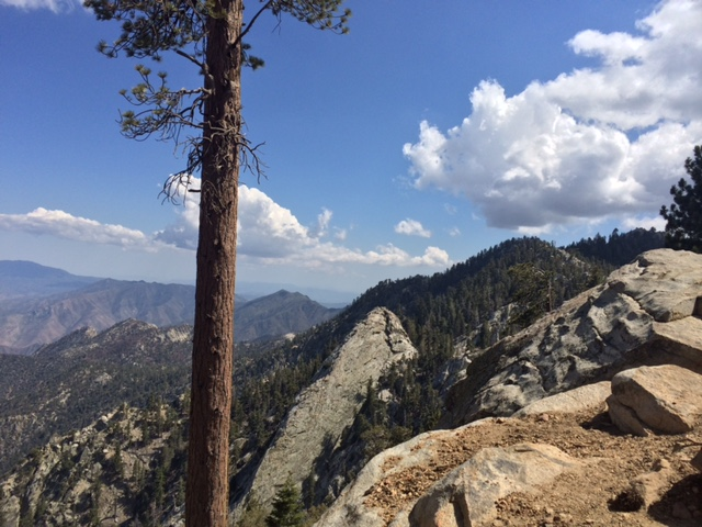 Up in the San Jacinto Mountains