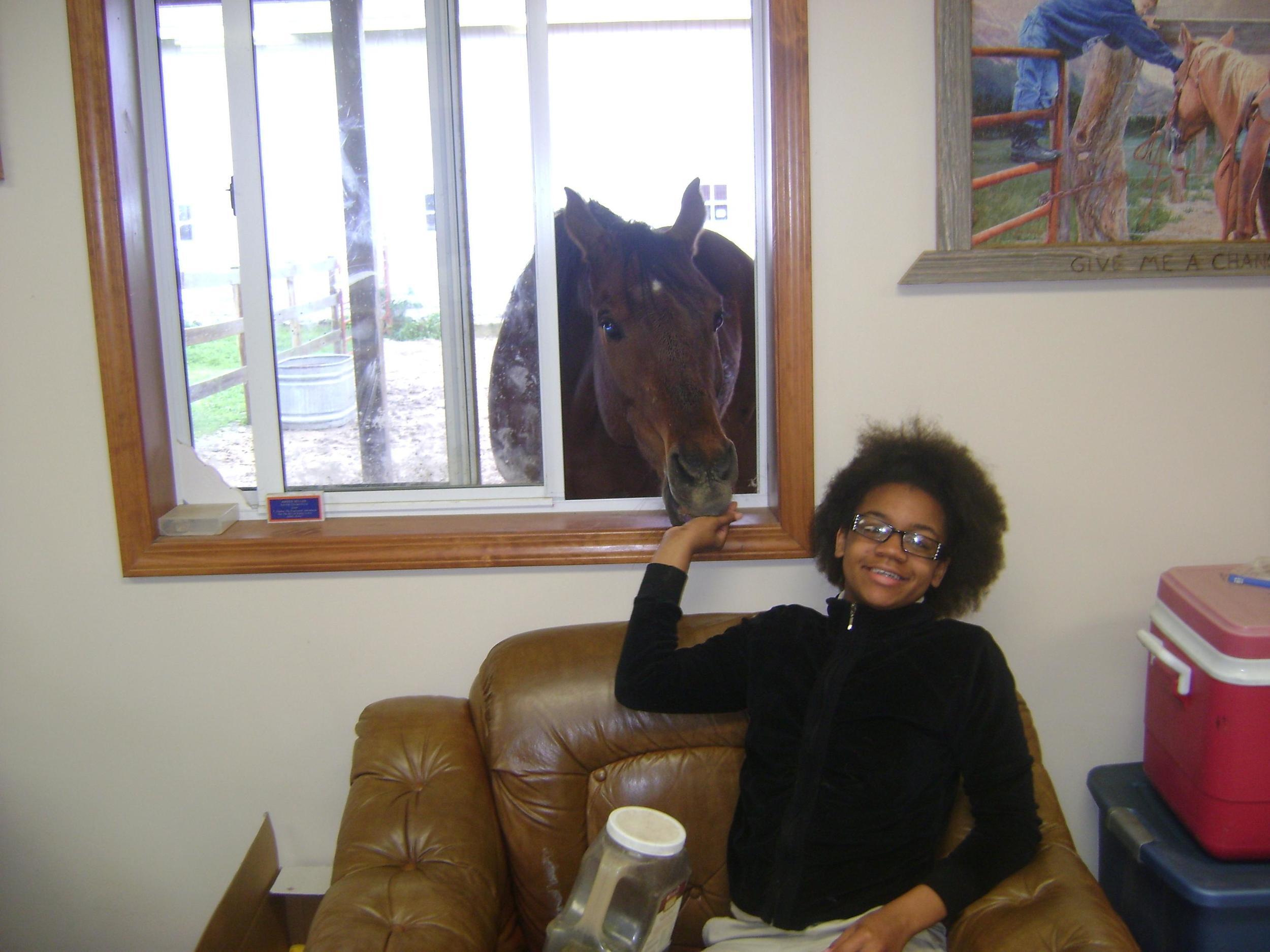Sponsor a Horse!