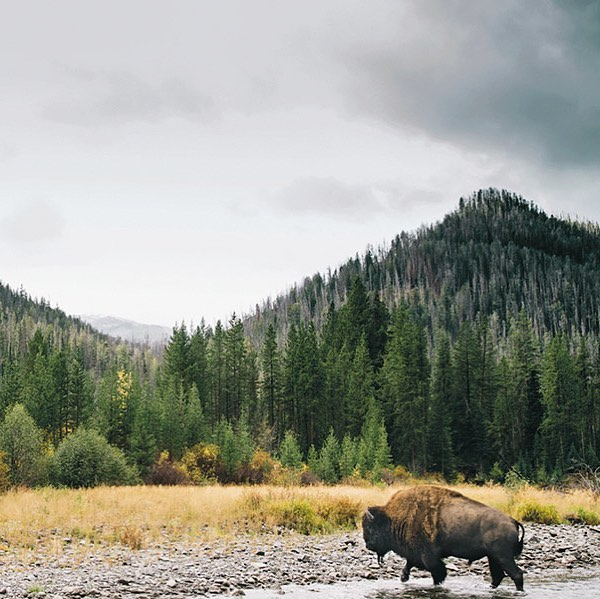 This is a *very cool* public access project: Yellowstone National Park partnered with an acoustic ecologist and the National Sounds Division to release a massive library of ambient nature sounds from the park into the public domain! Link in bio 👆🏻 #ListentoDawnChorus #ItIsMusic #Nature #PublicAccess Photo via @visitwyoming #wyoming #yellowstone #nationalpark #travel #explore #music #nature #optoutside #naturelover #music #sounds #communication #access #publicaccess