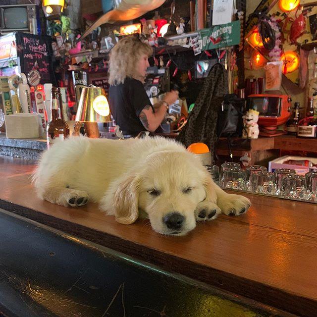 "How dog friendly is your ""dog friendly"" bar? #brooklynforever"