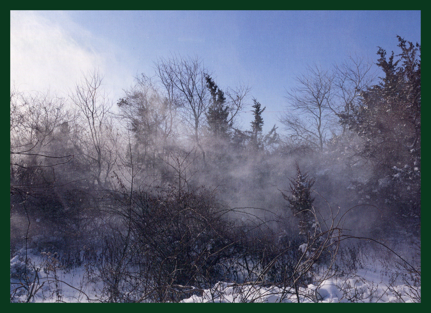 Brambles And Mist