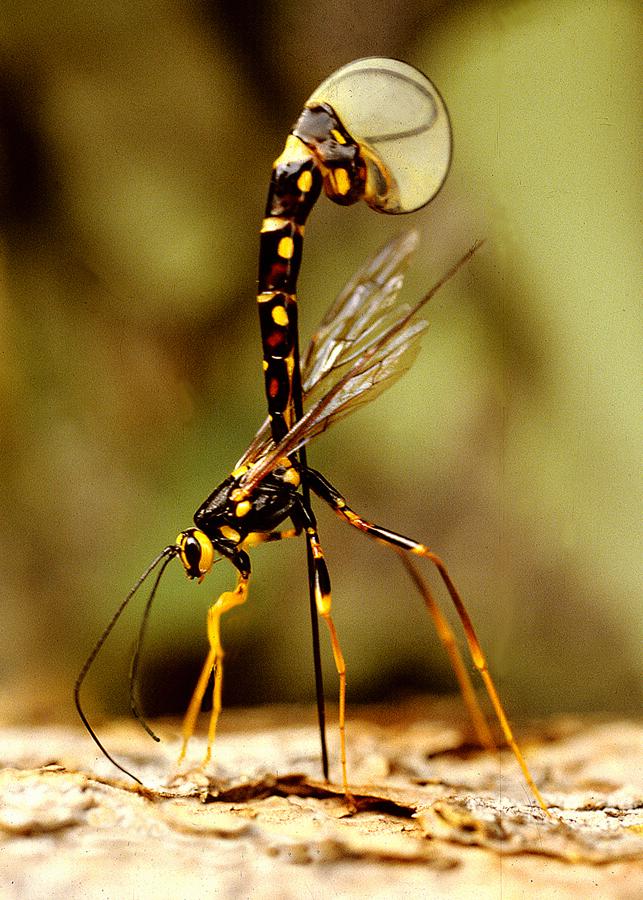 Iknewman Wasp 1,66MB.jpg