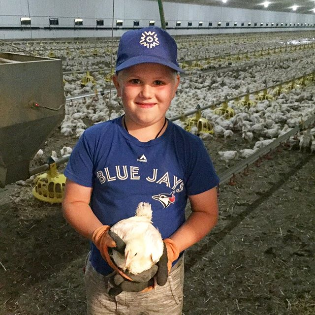 Ladies and gentlemen, introducing you to your future farmer!  This is my oldest boy and at 8 years old he spends every chance he can in the barns with his Dad, Grandpa, or cousin.  Like many others, our farm is a family farm.  #raisedbyacanadianfarmer #chicken #saskatchewan #saskblogger #discoverunder1k #farm365 #familyfarm #saskag #saskchicken