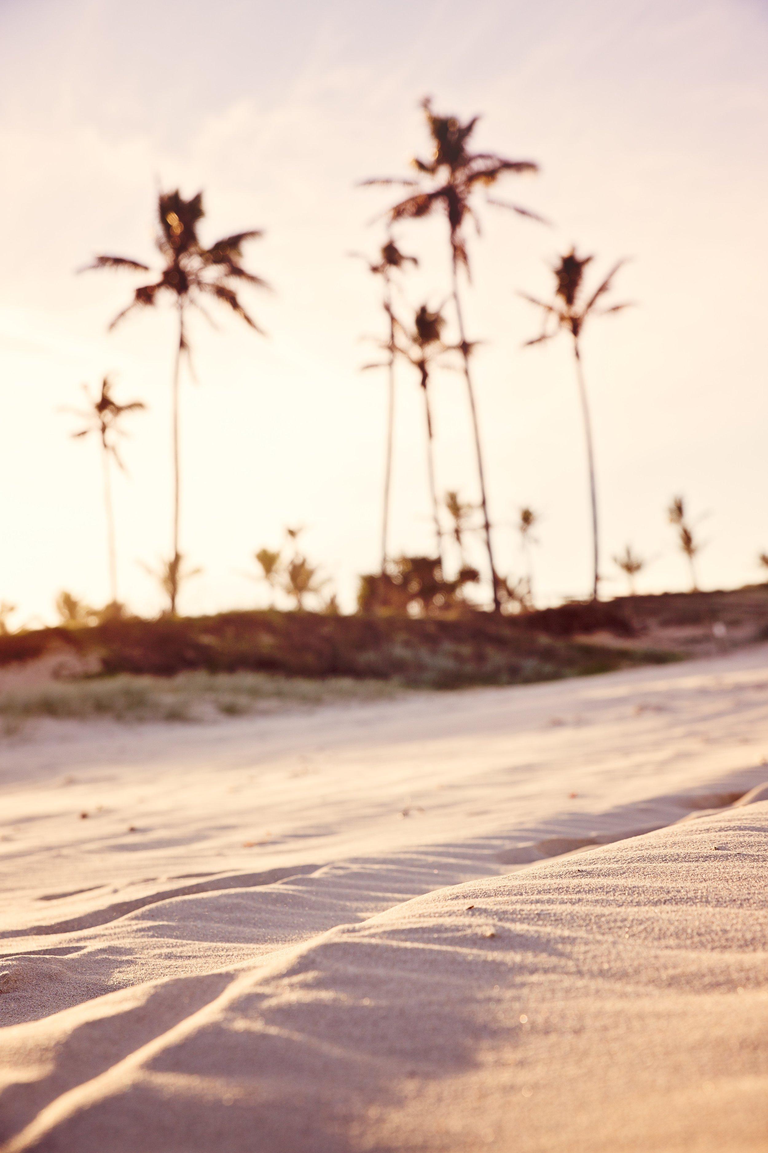 beach-blurred-background-golden-hour-1151282.jpg