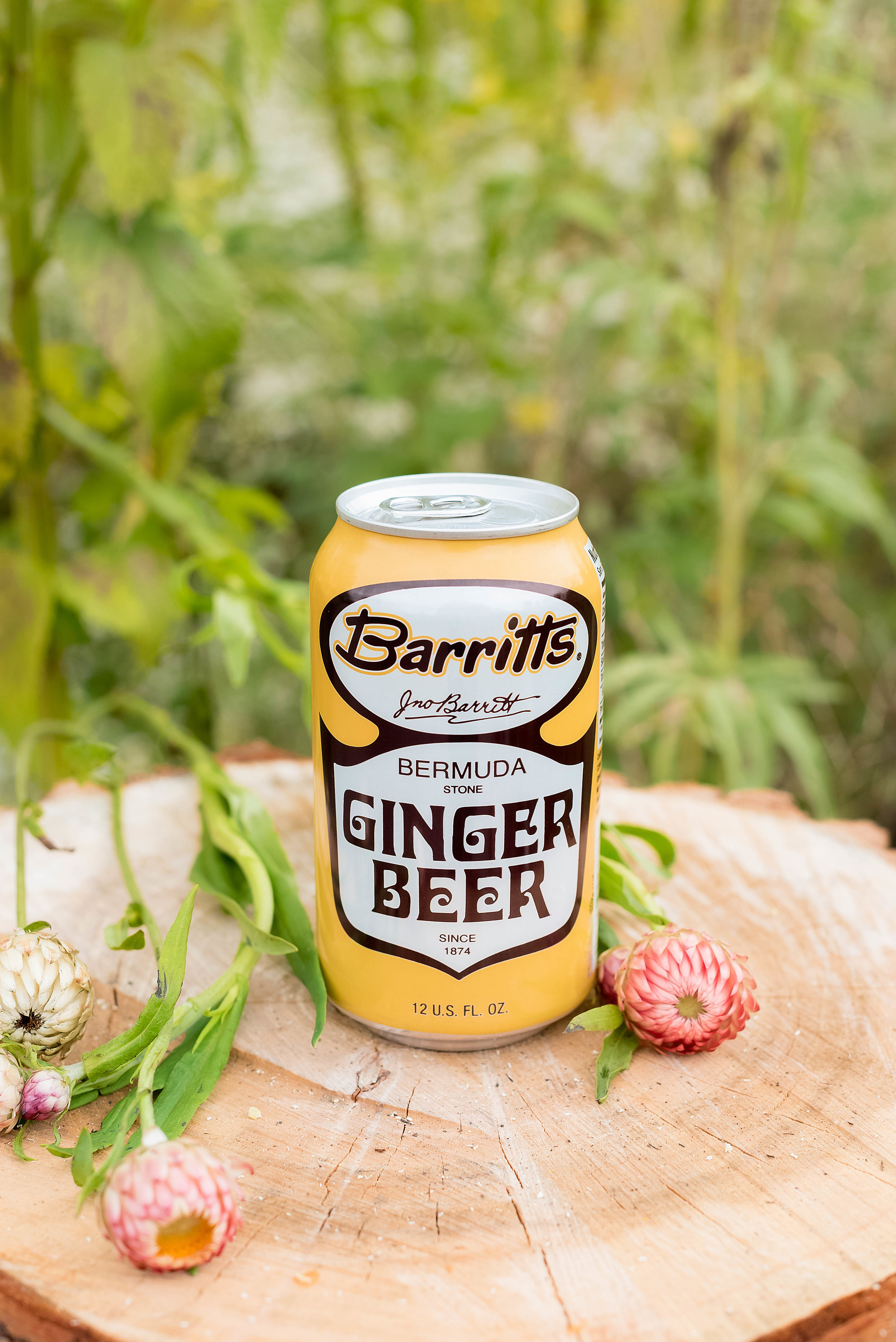 ginger beer shandy recipes