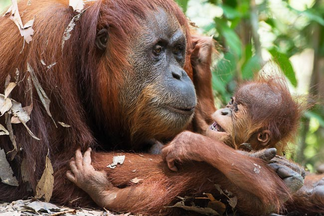 Mother cradles and plays with her baby. Image by Gita Defoe for Photographers Without Borders.