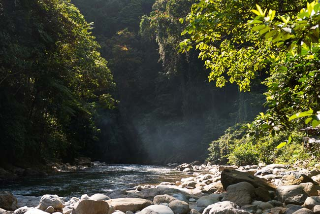 Gunung Leuser National Park. Image by Gita Defoe for Photographers Without Borders.