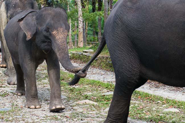 Sumatran elephants. Image by Gita Defoe for Photographers Without Borders.