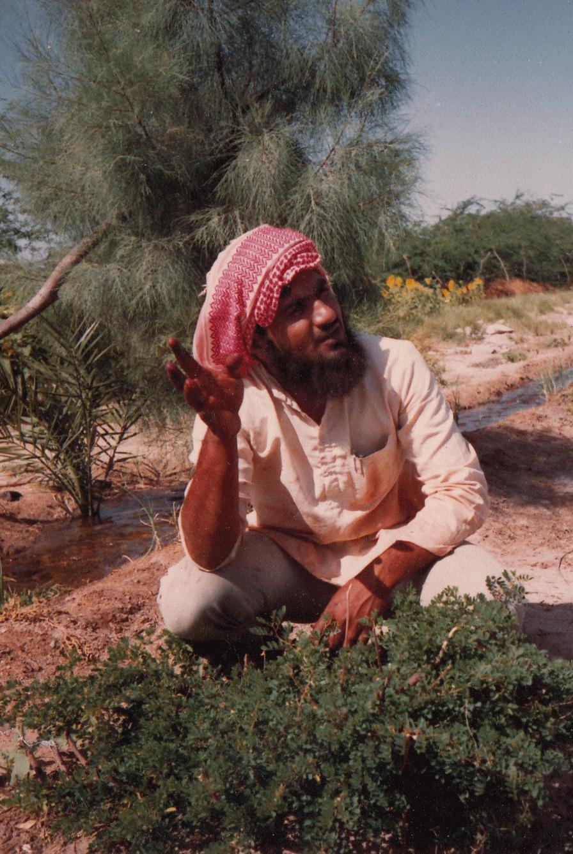 Indigo plant, Dhamadka