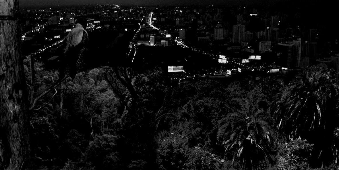 watching from treetops_sh_web.jpg