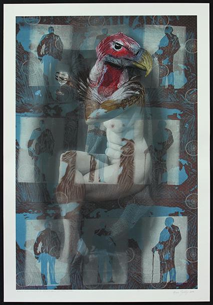 Torgos tracheliotus - (Lappet faced vulture) (2017)