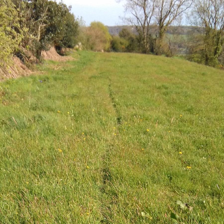 animal track, hogchester