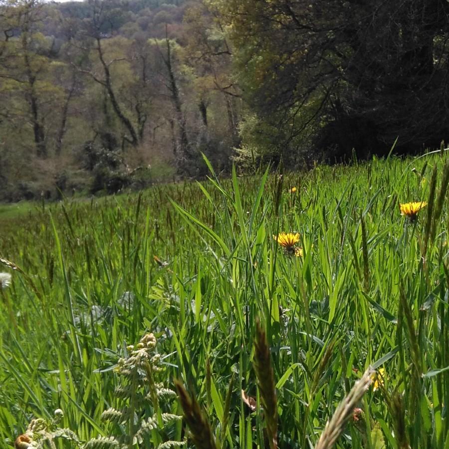 meadow, hogchester