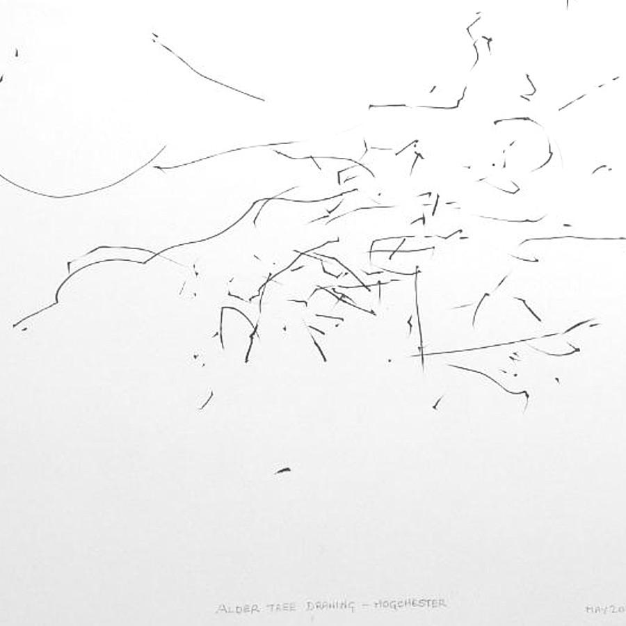 alder tree drawing