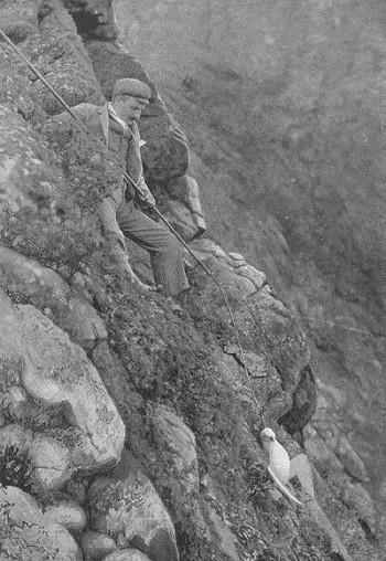 Hunting Fulmars on St. Kilda (Wikimedia Commons)