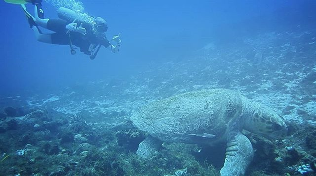 #ScubaDiving video link in bio! Why not subscribe while you're there and check out my other videos?  #Cozumel is a beautiful #island and I was blown away by the diving I've had there—from #turtles over 100 years old, to king #crabs fighting, to many more beautiful sights. I didn't film every dive because I wanted to maintain my presence in the moment, but I hope this little highlight reel can inspire you.  #Padi #Mexico #BeachLife #Diving #ProducerLife #ShakinInTheSummer