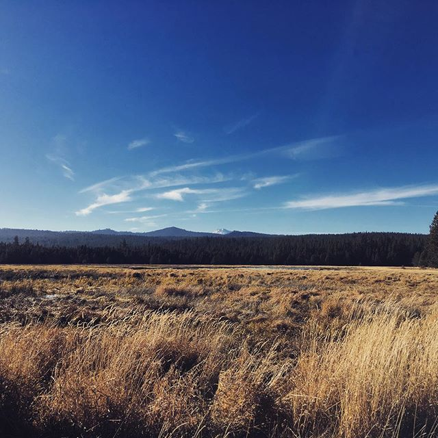 Lesson from the trail #12: if you're nervous about approaching a longer run- a highly effective technique for keeping your mind off your tired legs is to consume a large bowl of spicy Thai curry about an hour before said run. Your inner burn will mask any exterior discomfort. #yourwelcome #themountainsarecalling #centraloregon #runultra #archesultra
