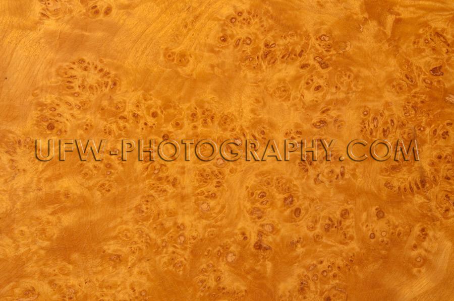 Beautiful burl wood surface patterned background XL Stock Image