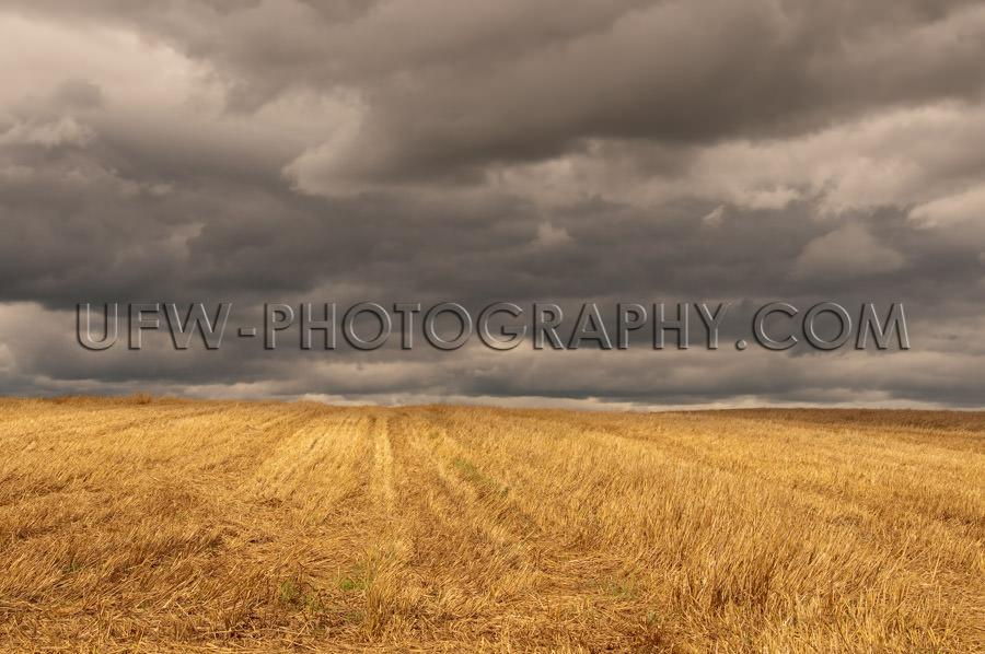 Autumn golden stubble field dark cloudy stormy sky Stock Image