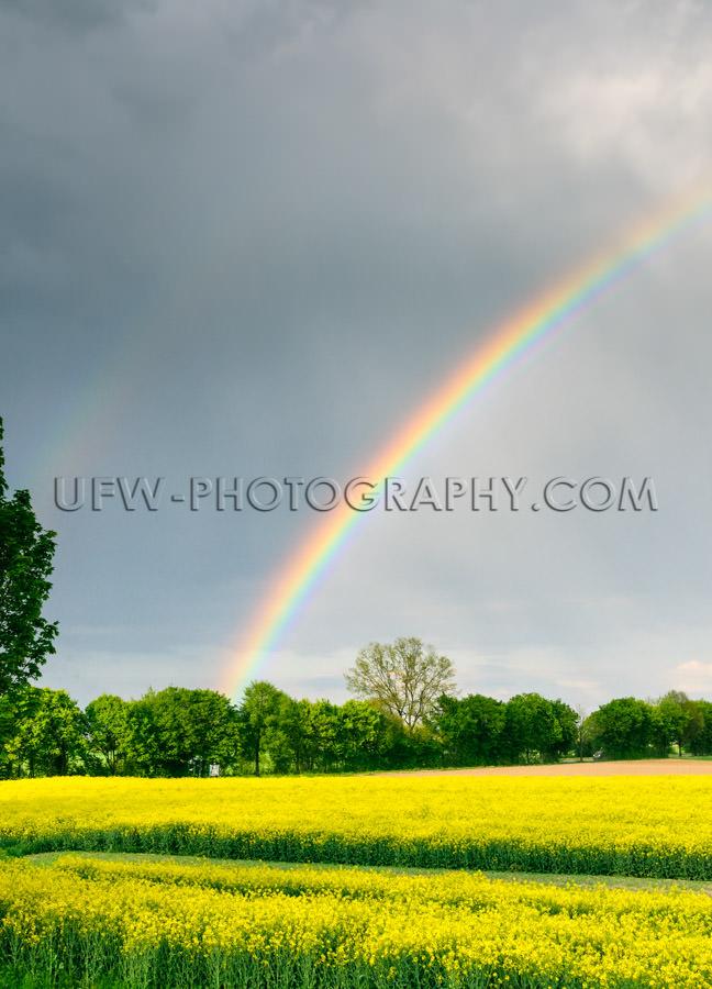 Beautiful rainbow bright yellow rapeseed landscape rainy sky Sto