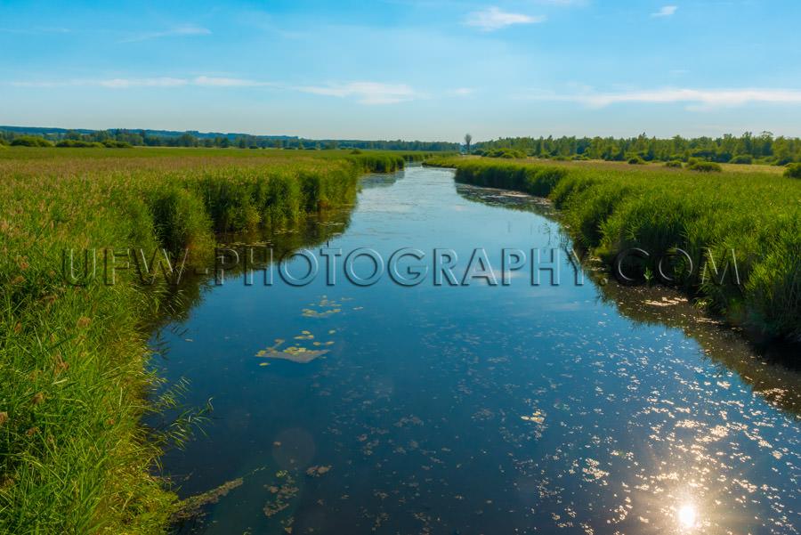 Bog nature reserve river reed grass habitat green sky tranquil S