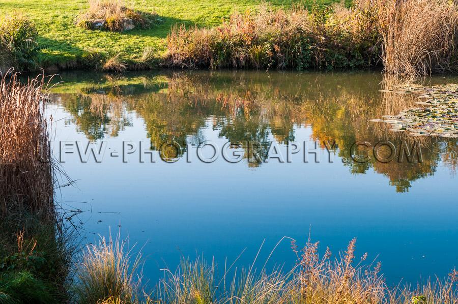 Ecosystem wilderness habitat blue pond brown reed grass Stock Im