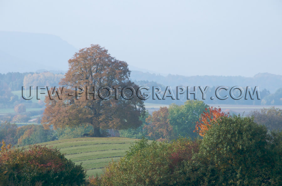 Misty fall landscape with lone lime tree on a hill Stock Image