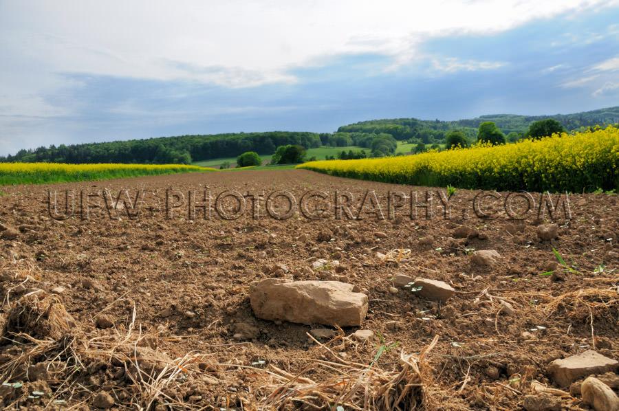 Plowed rocky farmland stony soil between canola fields Stock Ima
