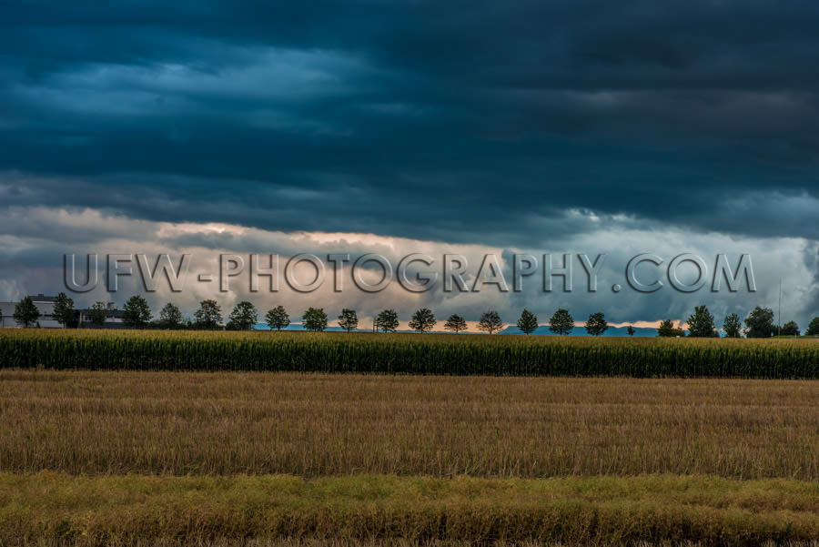 Stormy dark cloudy sky field row trees sinister country Stock Im