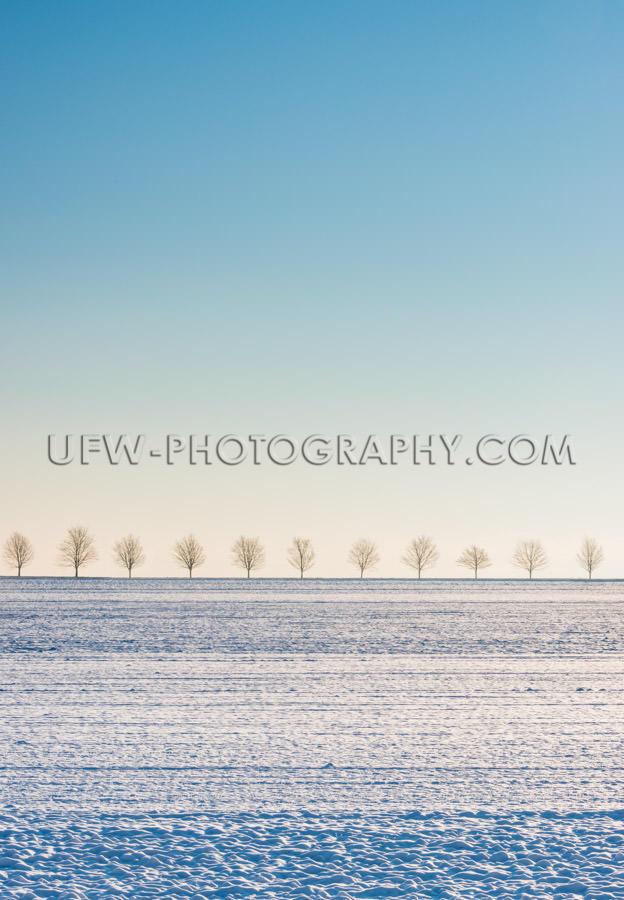 Winter scene snow covered field, row of trees, blue sky - Stock