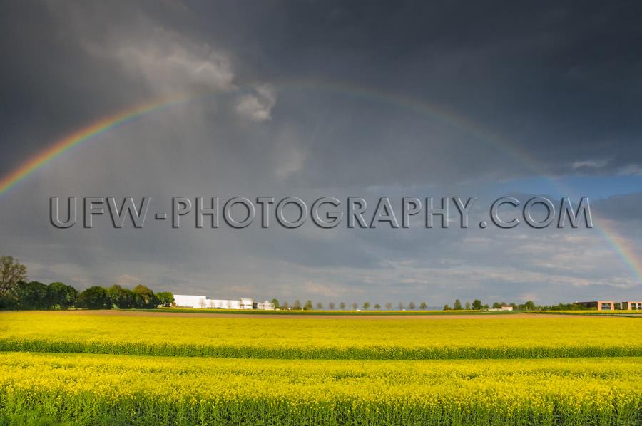 Yellow glowing rapeseed landscape dramatic rainy sky rainbow Sto