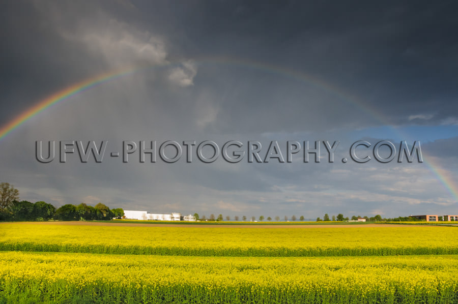 Yellow glowing rapeseed landscape dramatic rainy sky rainbow Sto