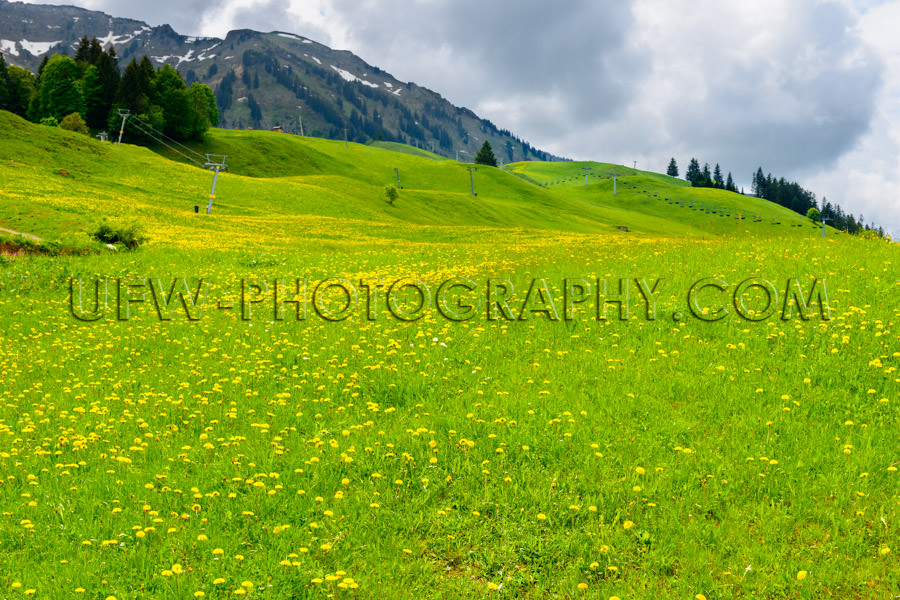 Alpine beautiful spring meadow landscape blossom hilly Stock Ima