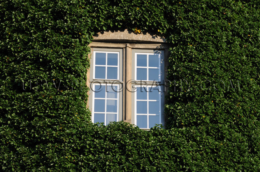 Window surrounded green ivy romantic fairy-tale castle window fu