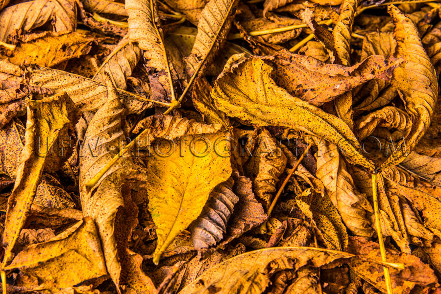 Beautiful autumn leaves background golden brown yellow Stock Ima
