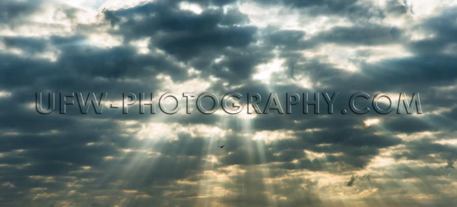 Rays sunlight penetrate dark clouds dramatic sky lonesome bird X