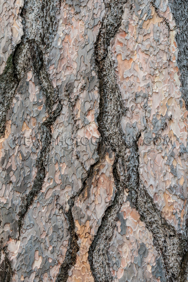 Pine tree bark full frame structure nature background Stock Imag