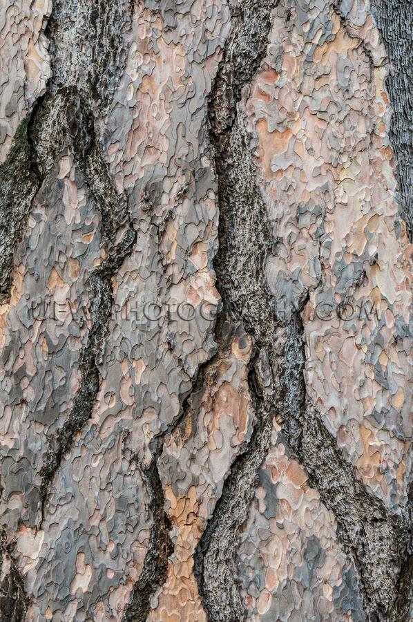 Kiefer Tanne Rinde Vollformat Struktur Natur Hintergrund Stock F