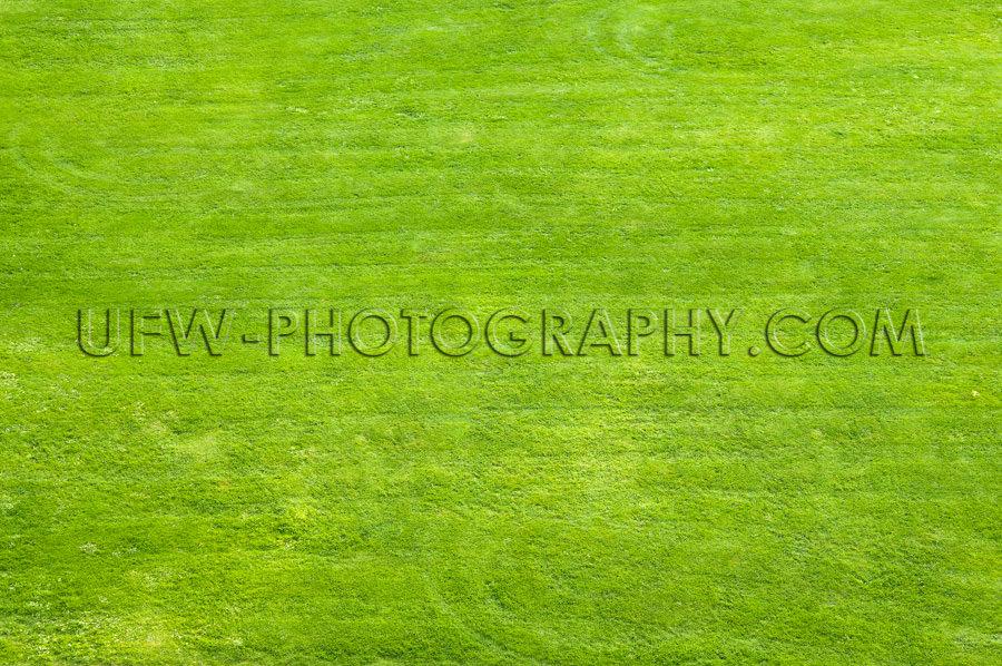 Rasenfläche Zum Spielen Sonnenbaden Erholung Stock Foto