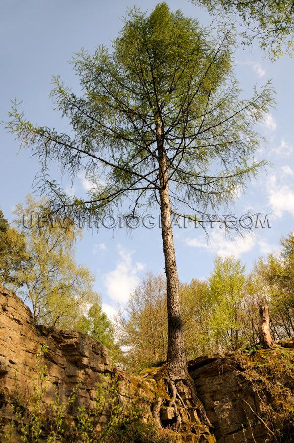 Baum Wurzeln Am Rand Eines verwitterten Felsens Stock Foto