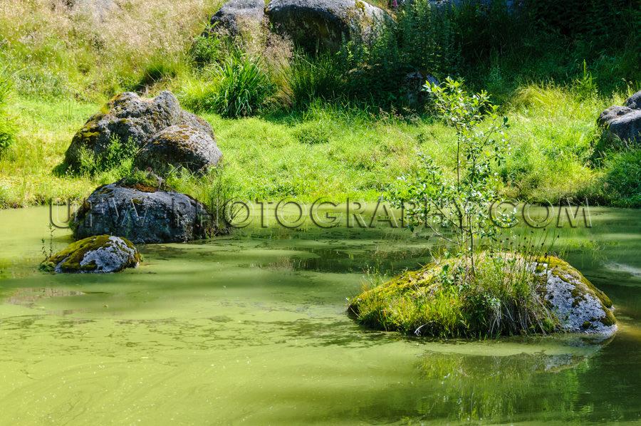 Grüner Teich Felsen Gras Wald Wildnis Biotop Stock Foto