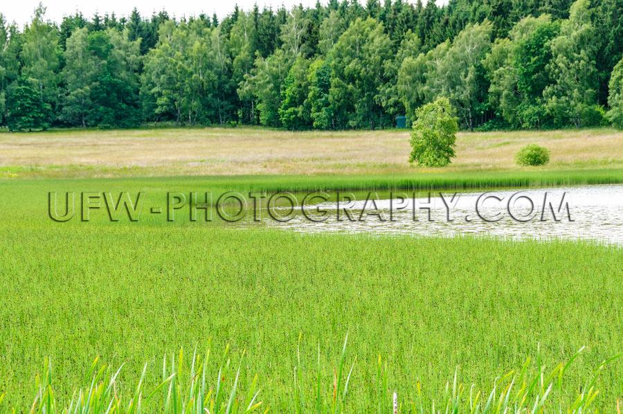 Grün Sumpfwiese See Wald Landschaft Naturschutzgebiet Stock Fot