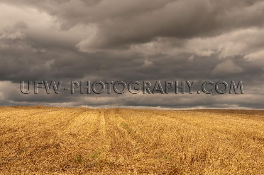 Herbstlich Goldenes Stoppelfeld Dunkel Stürmischer Himmel Stock