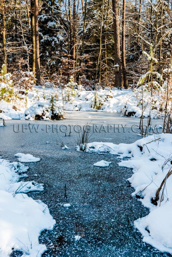 Winter Wildnis Biotop Eis Gefroren Teich Schnee Pflanze Wald Sto