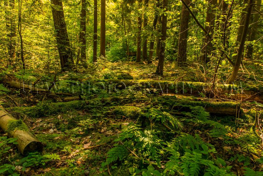 Schön Wildnis Wald Grün Umgestürzt Abgebrochen Bäume Üppig
