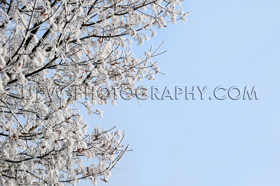Winterszene Eisbedeckt Äste Baum Blau Himmel Stock Foto