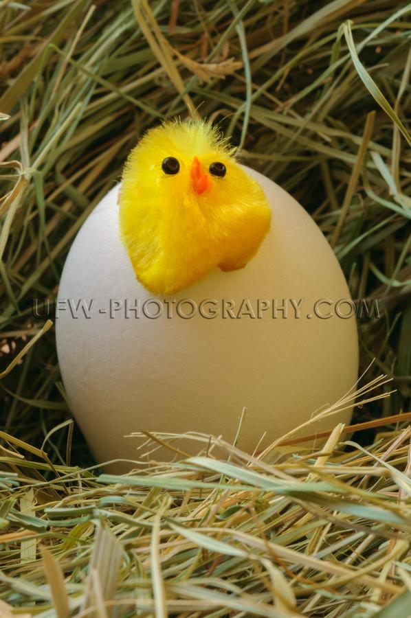 Küken Brüten Stroh Nest Dekorativ Figur Stock Foto.jpg