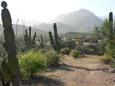 06.PuntaMontalban.cactus.jpg