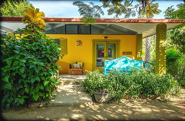 "New Listing. ""Mi Casa es Su Casa"" 1 bed room,short walk to beach. Located in the best neighborhood in Todos Santos and surrounded by big mango trees. 220k. . . . . . . . #homeforsale #todossantos #baja #boho #bohemian #jungle #mangotrees #beach #comefindme #realestate #amerimexrealty #surf"